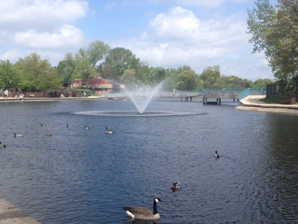 The Mill Pond in downtown Brighton, is popular for geese, ducks and people! The Tridge is in back