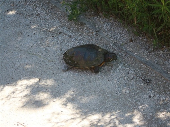 Visit the Outdoor Discovery Center and you may see turtles looking for a place to lay their eggs