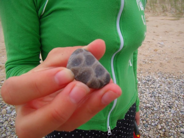 Petoskey Stones found at north end of a Frankfort Beach
