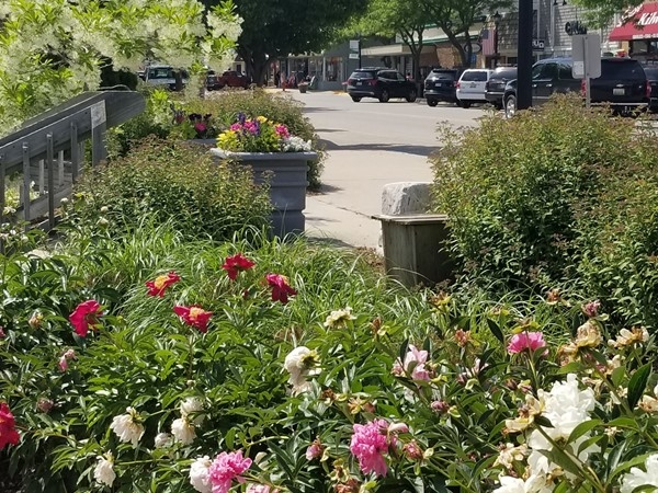 Visit Rotary Park next to City Hall in Frankfort for seasonal floral displays
