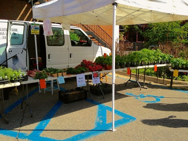 Fresh produce and herbs at the Saline Farmers Market!