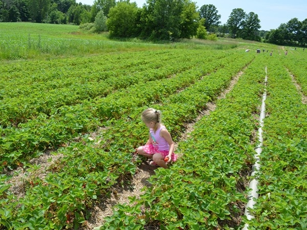 Spicers Orchard has plenty of family fun year round