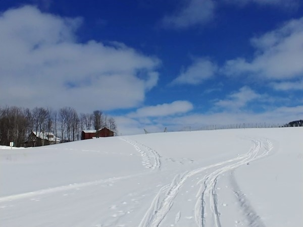 XC ski or snowshoe the trails at 45 North Vineyards and Winery