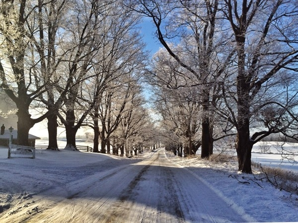 Riker Road is one of Michigan's Natural Beauty Roads