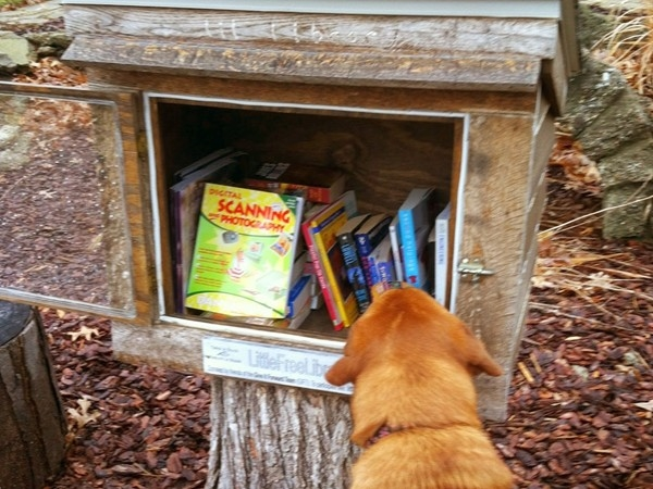 Picking out a book at the Little Free Library, on a rainy spring day