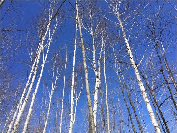 Even on a slippery trail, a look up is rewarded at Clay Cliffs Natural Area