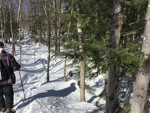 Sunny day snowshoeing in the woods. Blaze your own trail