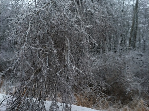 Ice storm of 2014; taken off Seymour Rd in Flushing