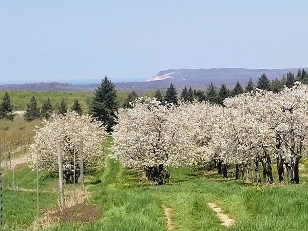 Orchards blooming and Empire Bluff in distance