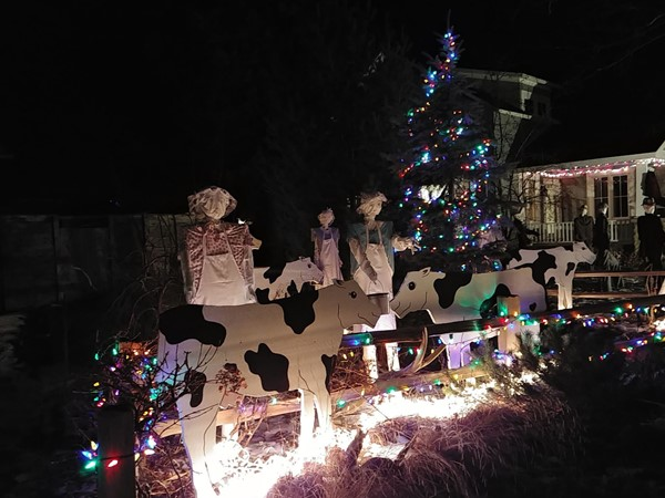 Eight Maids a Milking...enjoy the 12 Days of Christmas lights thanks to Spruce St neighbors