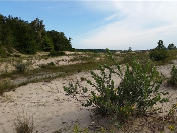 Sand dunes, soft sand, and sunshine at Mt Mcsauba Nature Preserve